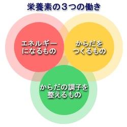 栄養素の3つの働き